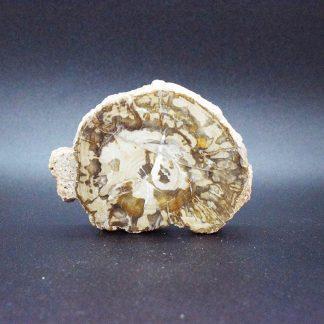 Xilópalo - Madera Petrificada
